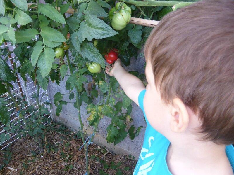 13-tomates poivrons (5)