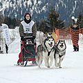 Courses de traîneau pour nos malamutes : saison 2012
