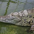 la ferme aux crocodile (68)