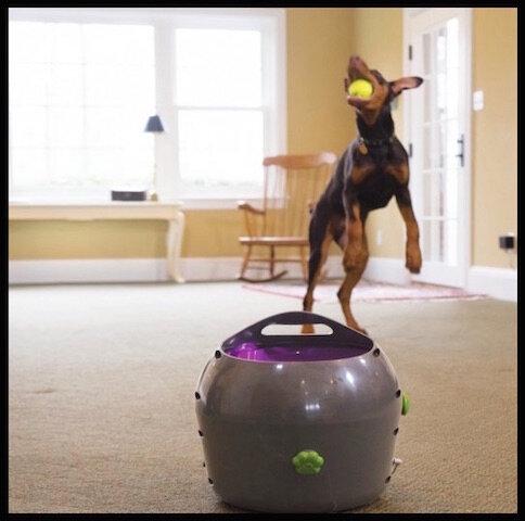 petsafe lanceur balle automatique chien 1
