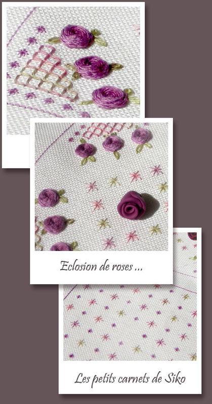 eclosion_de_roses