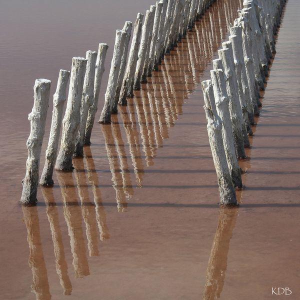 lignes salines
