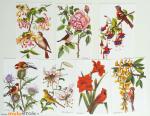 Anciennes_images_scolaires_1_Fleurs_Oiseaux_muluBrok_Vintage