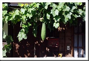 nakasendo-2011-016-luffa-hechima