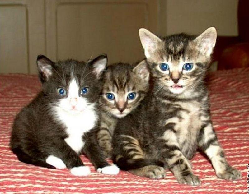 Les 3 chatons : Lulu, Turtle, Jipounet
