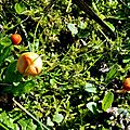 champignon-05911 (8)