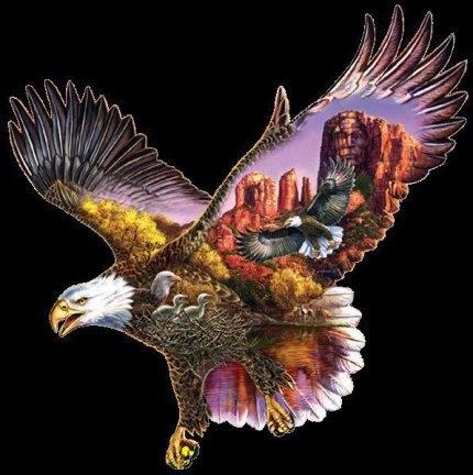 grand aigle survolant l'aire sauvage