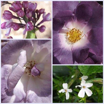 Fleurs mai 2013 (14)