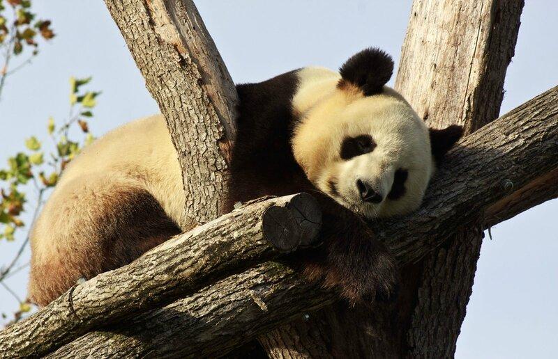 90-Panda Geant
