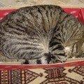 La ronde des chats en boite