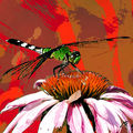 03B. La libellule rouge