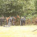 équitation de pleine nature - rallye équestre (53)
