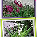 Des fleurs inconnues dans mon jardin