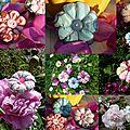 2012 1ères fleurs japonaisesbis