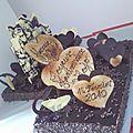 Royal chocolat 100 personnes, né un 14 février...
