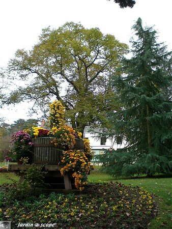 Chrysanthemes_23_Parc