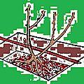 La plantation des rosiers