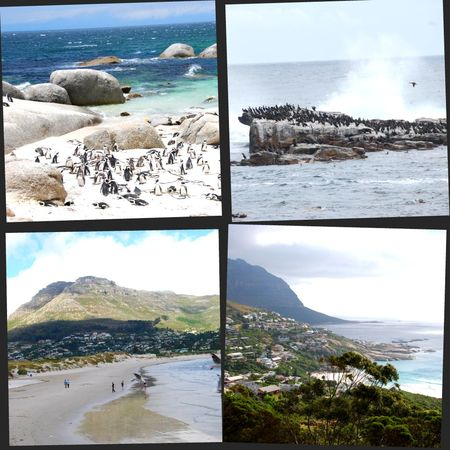 collagecapepoint