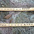 01 - 0720 - carlettu orsoni - annata 2000