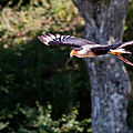 rapaces beauval12