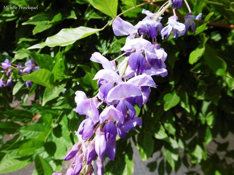 1-Fleurs de Léon 280619