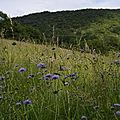 [drôme] dans un grand champ de fleurs....