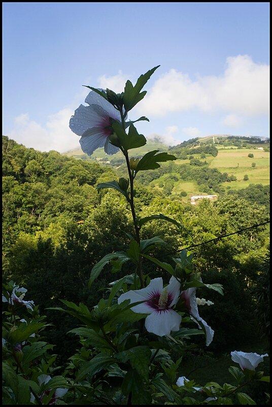 59-Flower