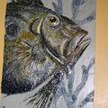 poisson St.Pierre,48x68cm