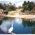 animal kingdom 009