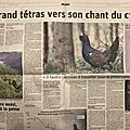 Le grand tétras vers son chant du cygne