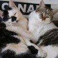 Les ptits chats sans maître