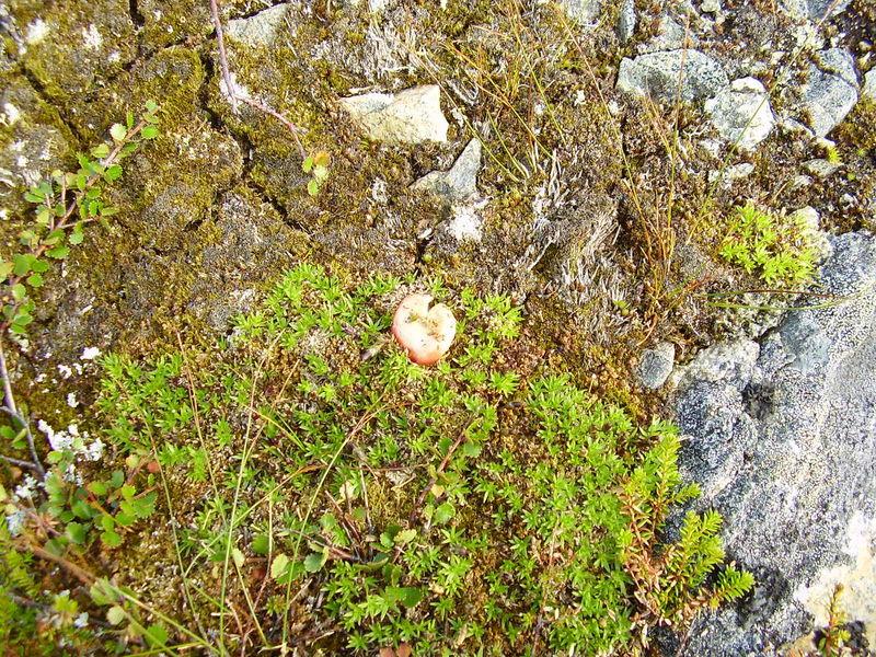 10-08-08 Grotfjord (33)