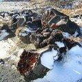 La roche volcanique