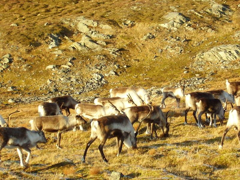 17-10-08 Sortie Montagne et rennes (117)