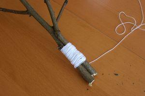 Ligatures des branches