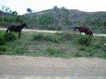 nord_bout_poum_chevaux_sauvage