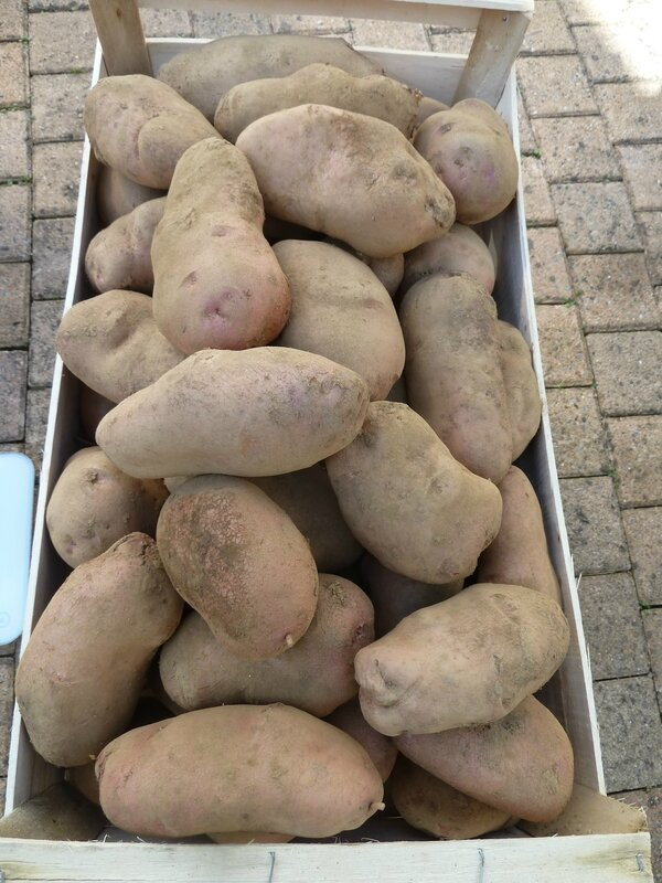 7-pommes de terre (13)