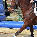 04-Veykà Photographies Horse-Ball