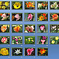 43_trieuse diapo tulipes