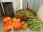 13-récolte du jour (3)