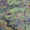 L'automne c'est aussi le temps des couleurs...