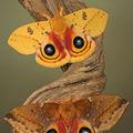 Butterfly (87)