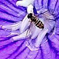 Faune et flore 10 (Au coeur de la fleur)