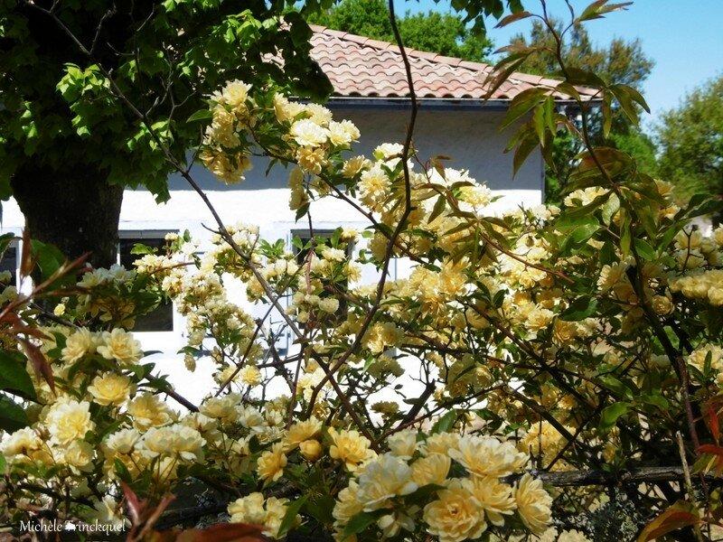 1-Fleurs de Léon 220417