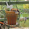 Windows-Live-Writer/jardin_B395/DSCF3119_thumb
