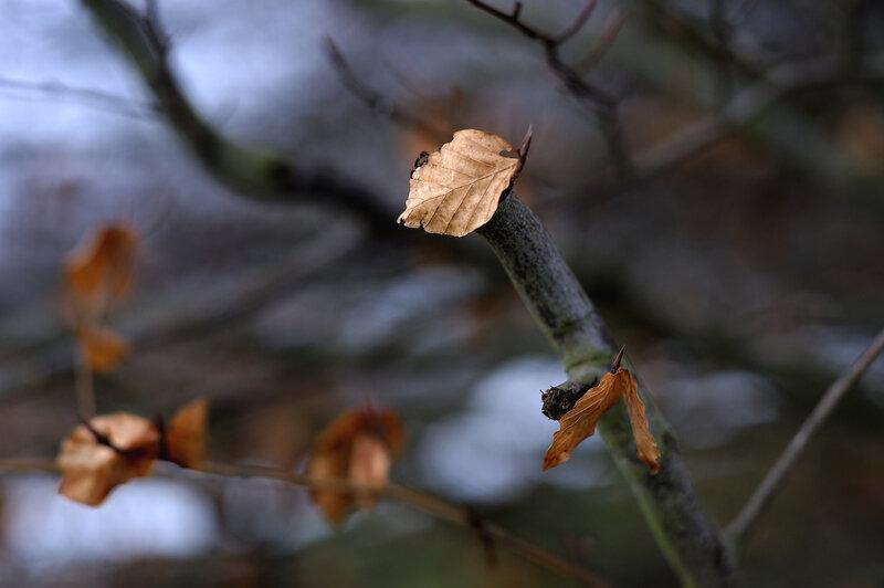 feuille sur l'arbre