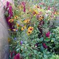 2009 10 13 Différentes fleurs annuelles de mon jardin