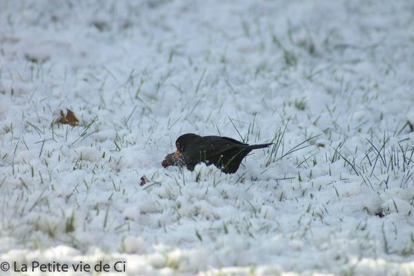 la_petite_vie_de_ci birds (4)