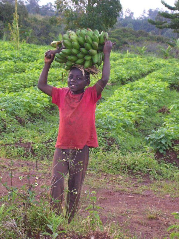 jeune de retour de la plantation