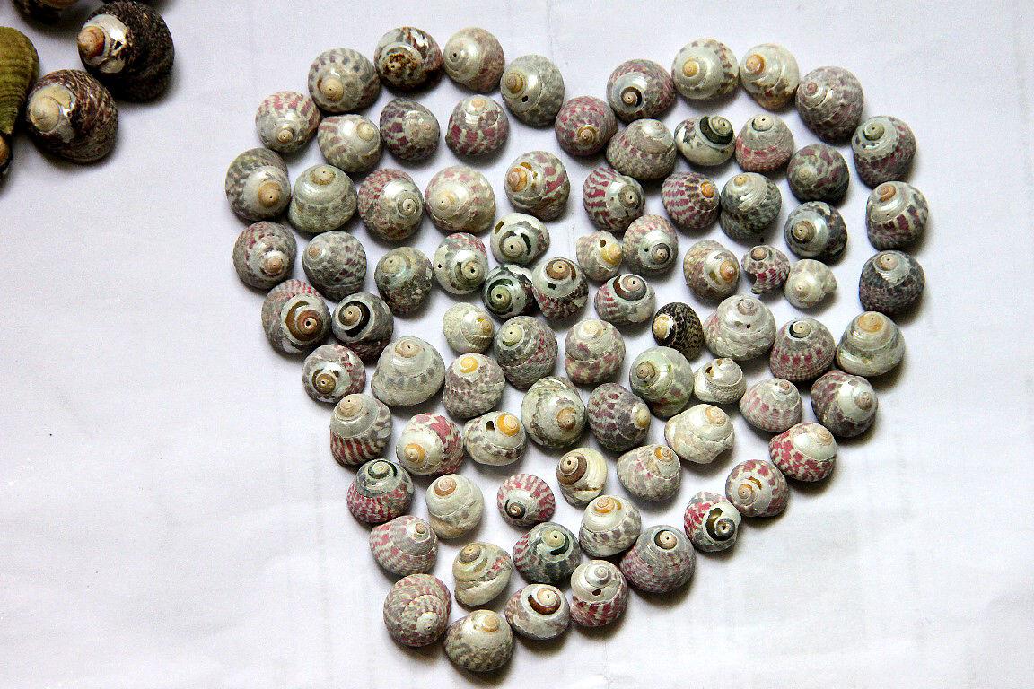 Coeur coquillages Port-Blanc, Bretagne_8567